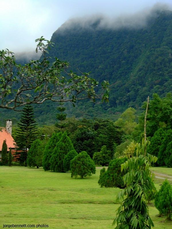 Photos of el valle de anton panama jorge bennett composer - Pinos para jardin ...